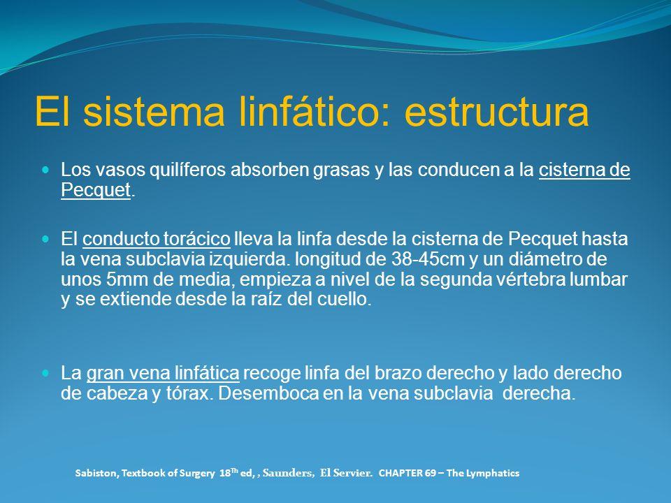 El sistema linfático: estructura Los vasos quilíferos absorben grasas y las conducen a la cisterna de Pecquet. El conducto torácico lleva la linfa des