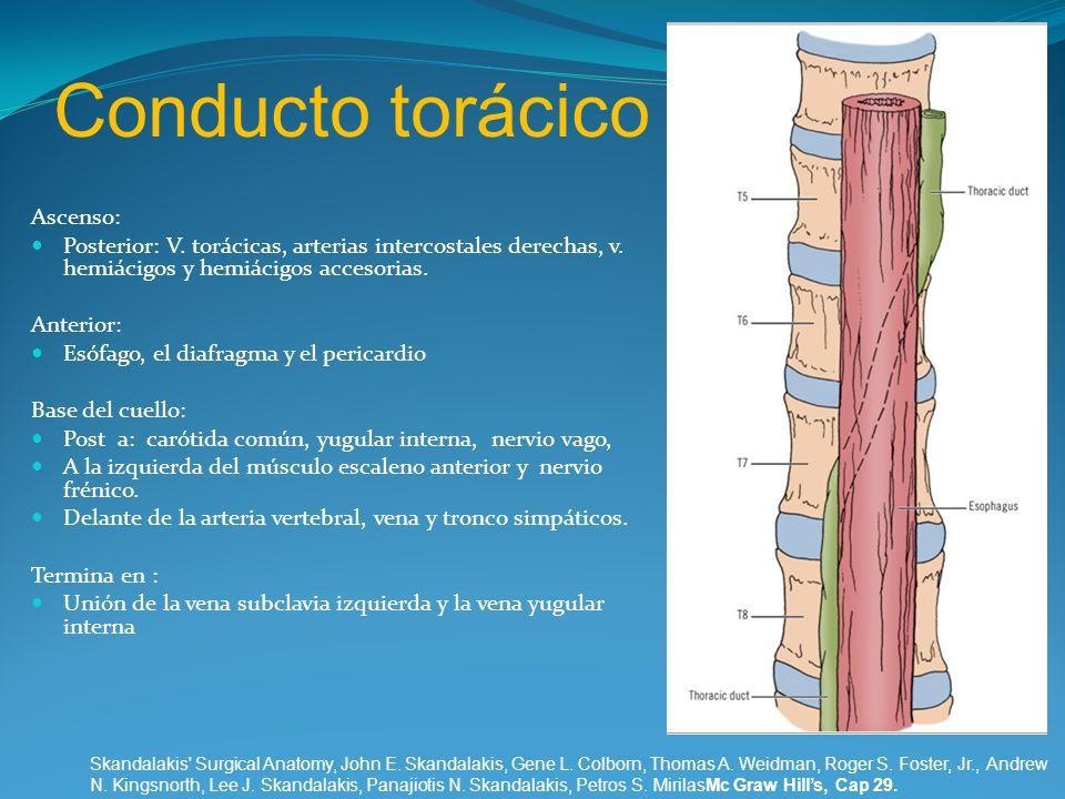 Conducto torácico Ascenso: Posterior: V. torácicas, arterias intercostales derechas, v. hemiácigos y hemiácigos accesorias. Anterior: Esófago, el diaf