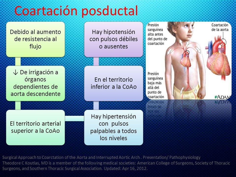 Coartación posductal Debido al aumento de resistencia al flujo De irrigación a órganos dependientes de aorta descendente El territorio arterial superi