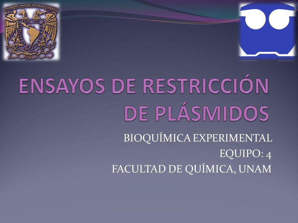 BIOQUÍMICA EXPERIMENTAL EQUIPO: 4 FACULTAD DE QUÍMICA, UNAM