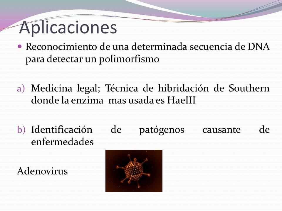 Aplicaciones Reconocimiento de una determinada secuencia de DNA para detectar un polimorfismo a) Medicina legal; Técnica de hibridación de Southern do