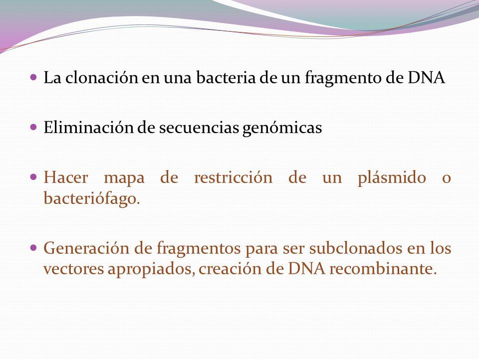 La clonación en una bacteria de un fragmento de DNA Eliminación de secuencias genómicas Hacer mapa de restricción de un plásmido o bacteriófago. Gener