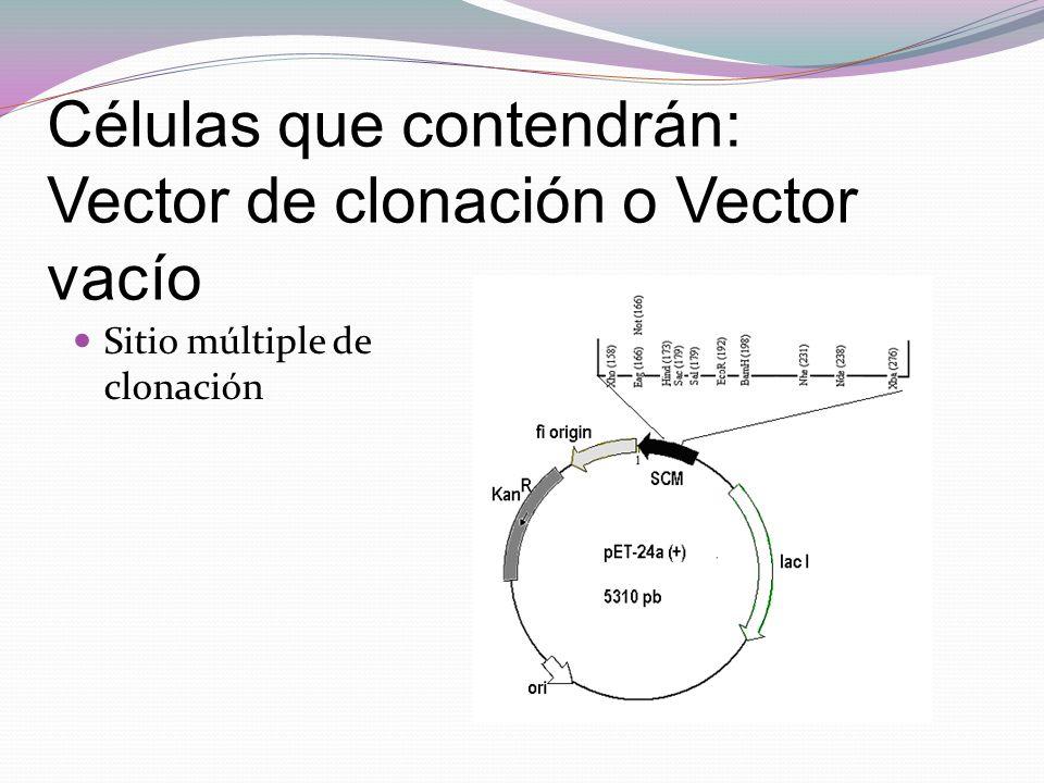 Sitio múltiple de clonación Células que contendrán: Vector de clonación o Vector vacío