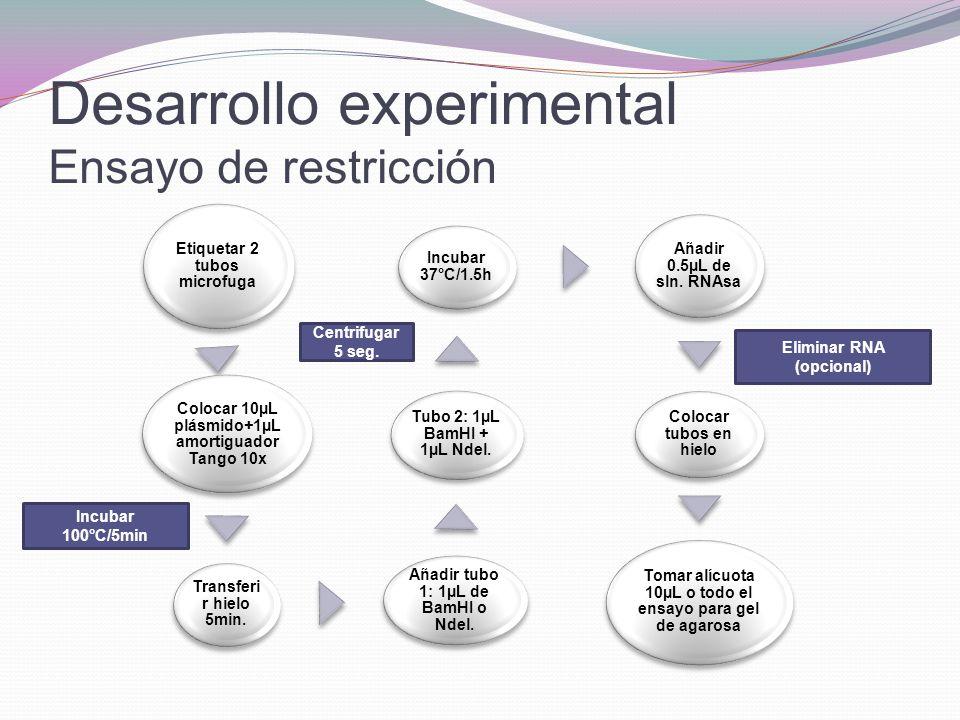 Desarrollo experimental Ensayo de restricción Etiquetar 2 tubos microfuga Colocar 10µL plásmido+1µL amortiguador Tango 10x Transferi r hielo 5min. Aña