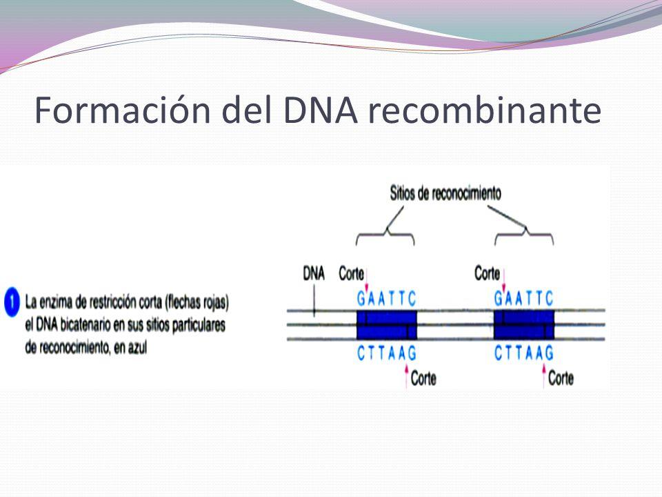 Bibliografía Madigan Martinko, et al, Brock biología de los microorganismos, Pearson education, 2008, pp: 300- 350.