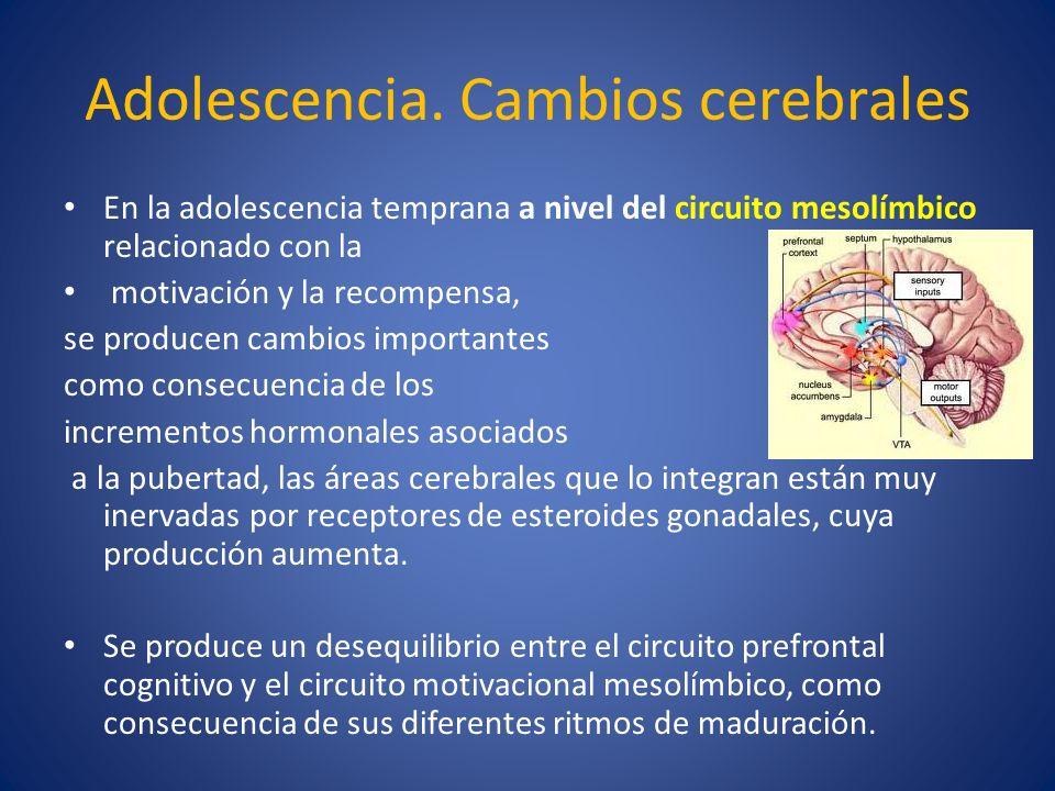 Adolescencia. Cambios cerebrales En la adolescencia temprana a nivel del circuito mesolímbico relacionado con la motivación y la recompensa, se produc