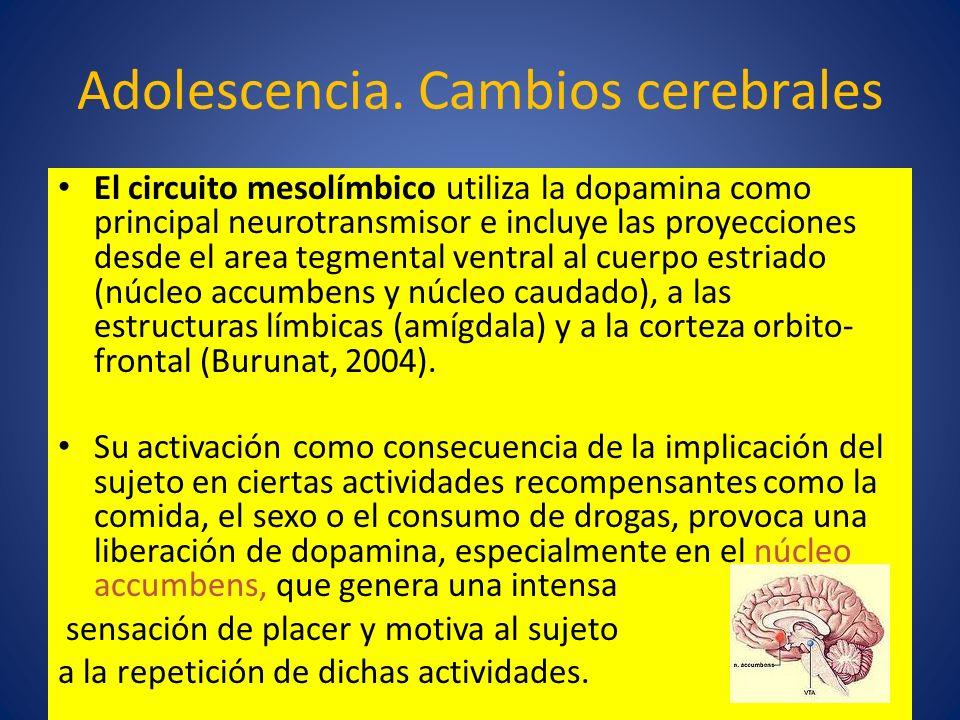 Adolescencia. Cambios cerebrales El circuito mesolímbico utiliza la dopamina como principal neurotransmisor e incluye las proyecciones desde el area t