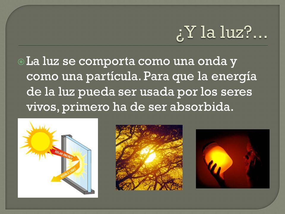 La luz se comporta como una onda y como una partícula. Para que la energía de la luz pueda ser usada por los seres vivos, primero ha de ser absorbida.