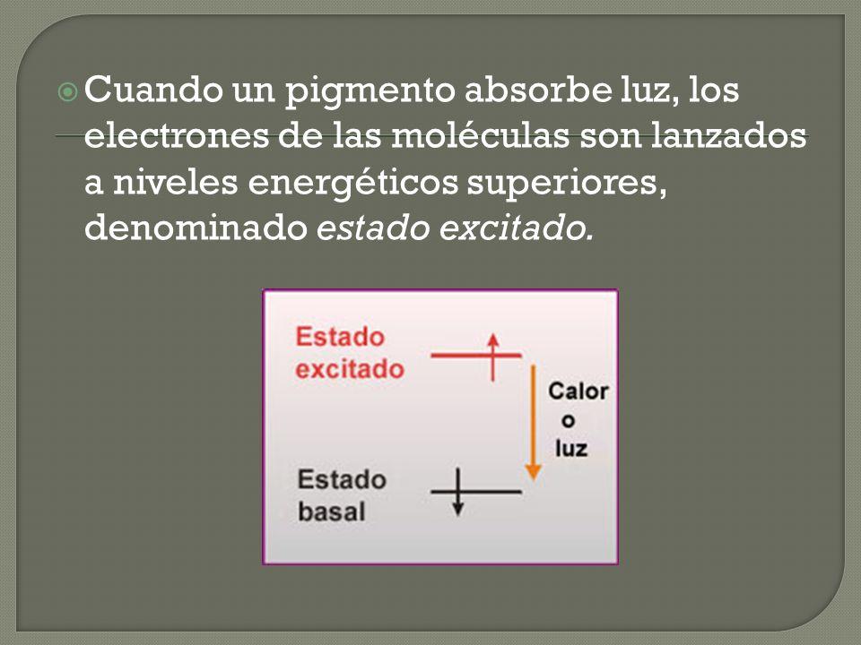Cuando un pigmento absorbe luz, los electrones de las moléculas son lanzados a niveles energéticos superiores, denominado estado excitado.