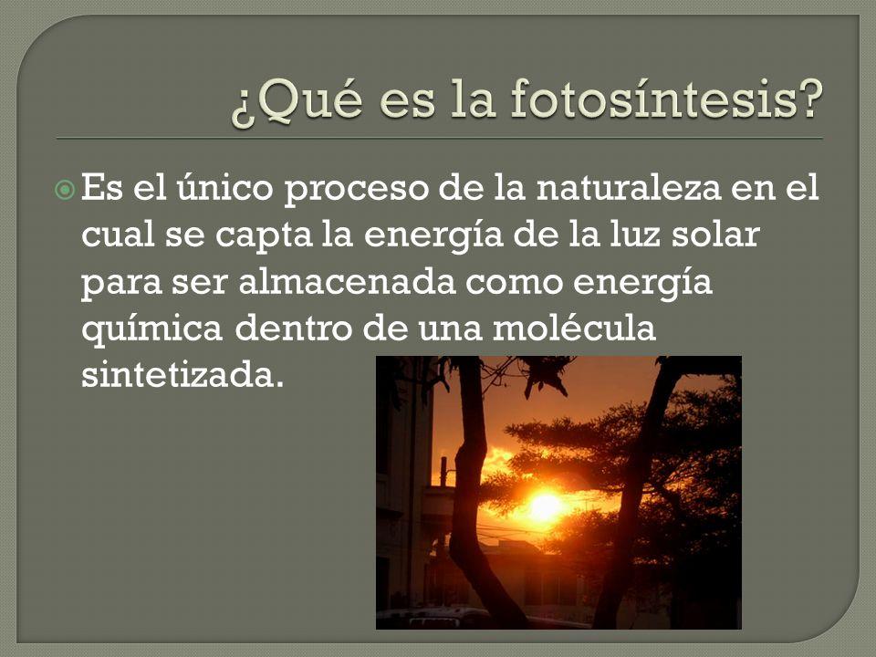 Es el único proceso de la naturaleza en el cual se capta la energía de la luz solar para ser almacenada como energía química dentro de una molécula sintetizada.