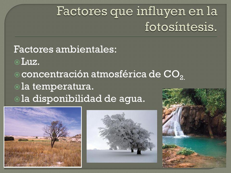 Factores ambientales: Luz. concentración atmosférica de CO 2. la temperatura. la disponibilidad de agua.