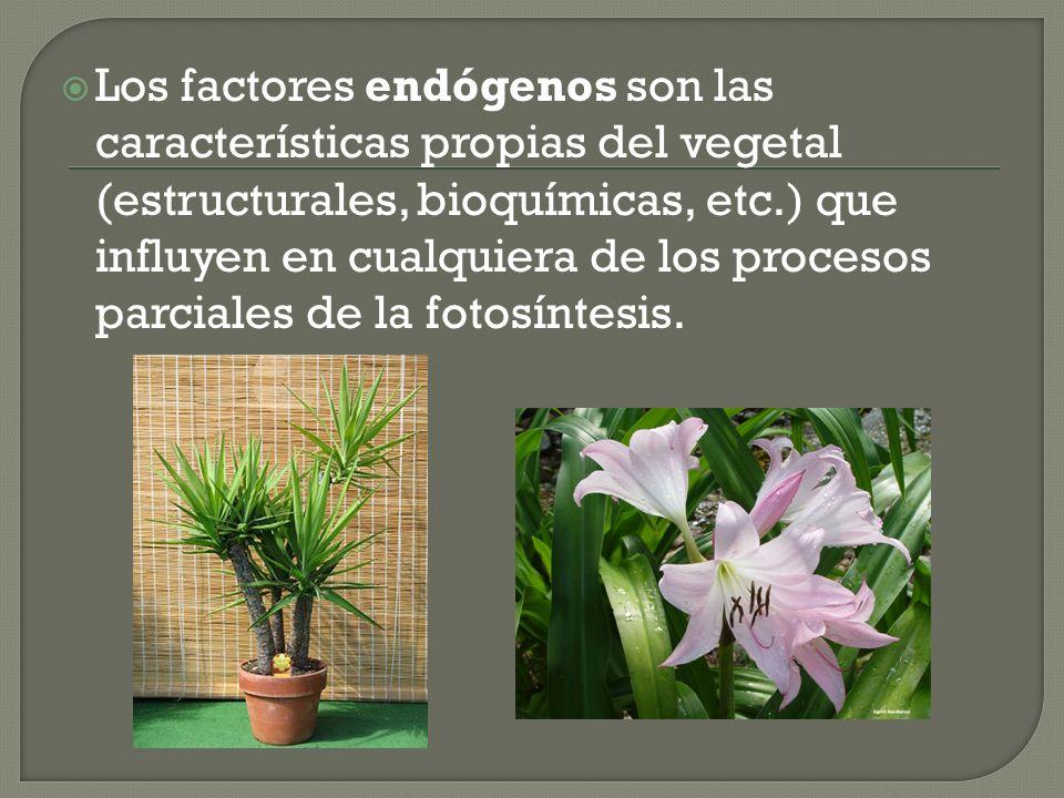 Los factores endógenos son las características propias del vegetal (estructurales, bioquímicas, etc.) que influyen en cualquiera de los procesos parci