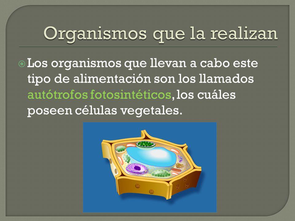 Los organismos que llevan a cabo este tipo de alimentación son los llamados autótrofos fotosintéticos, los cuáles poseen células vegetales.