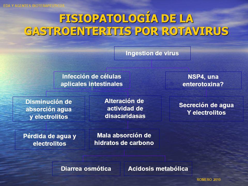 FISIOPATOLOGÍA DE LA GASTROENTERITIS POR ROTAVIRUS Acidosis metabólica Secreción de agua Y electrolitos Diarrea osmótica Alteración de actividad de di