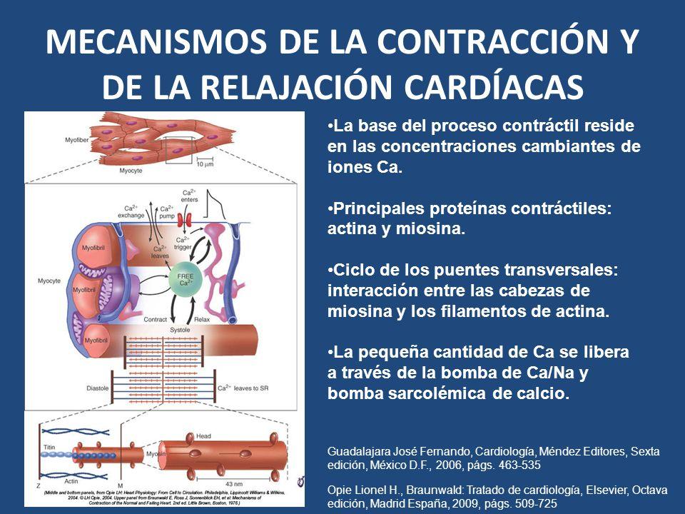 MECANISMOS DE LA CONTRACCIÓN Y DE LA RELAJACIÓN CARDÍACAS La base del proceso contráctil reside en las concentraciones cambiantes de iones Ca. Princip