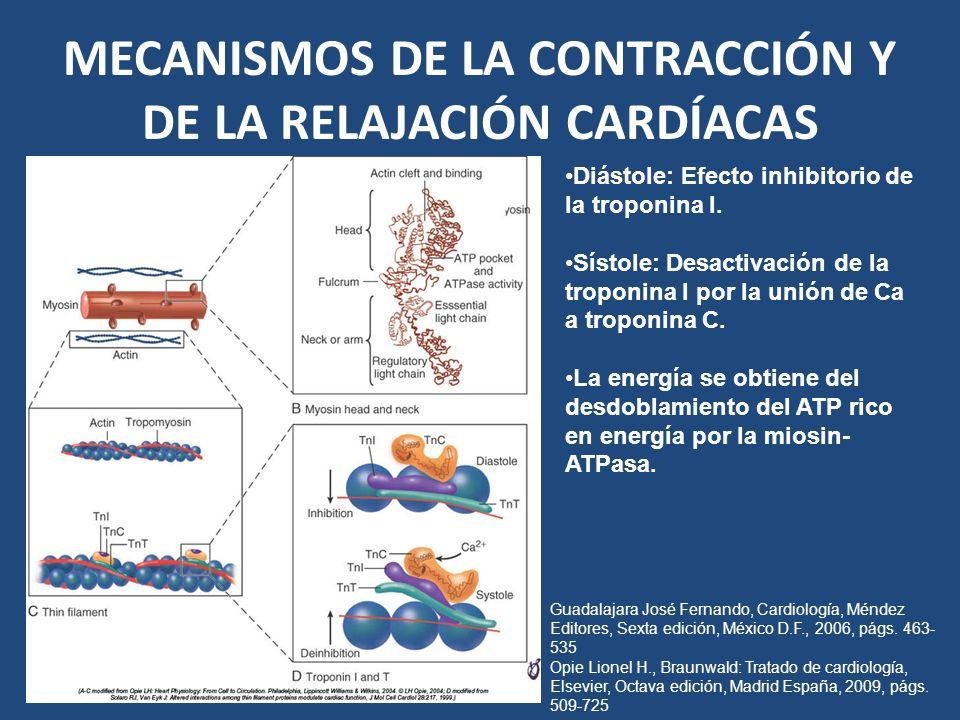 MECANISMOS DE LA CONTRACCIÓN Y DE LA RELAJACIÓN CARDÍACAS Diástole: Efecto inhibitorio de la troponina I. Sístole: Desactivación de la troponina I por