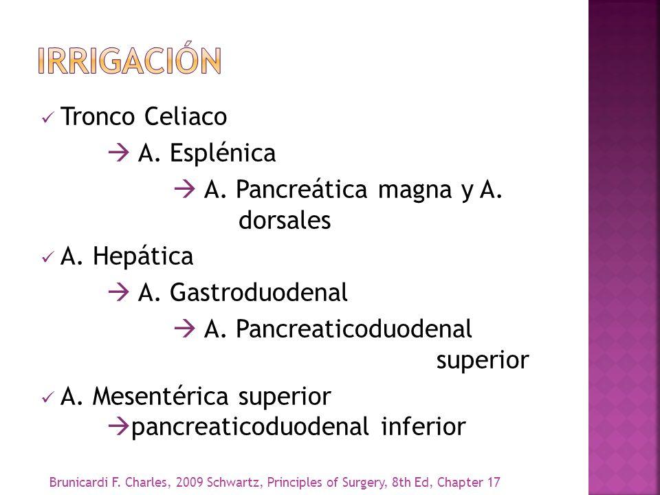 Tronco Celiaco A. Esplénica A. Pancreática magna y A. dorsales A. Hepática A. Gastroduodenal A. Pancreaticoduodenal superior A. Mesentérica superior p