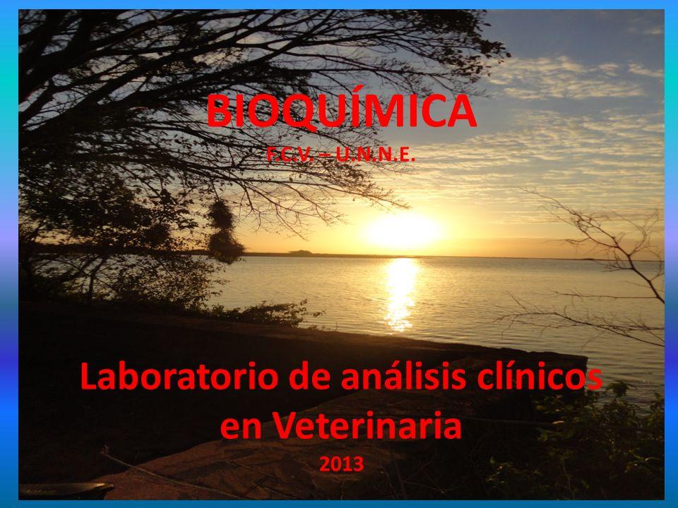 BIOQUÍMICA F.C.V. – U.N.N.E. Laboratorio de análisis clínicos en Veterinaria 2013