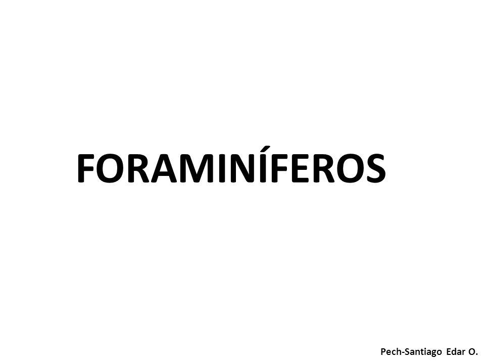 Pech-Santiago Edar O. FORAMINÍFEROS