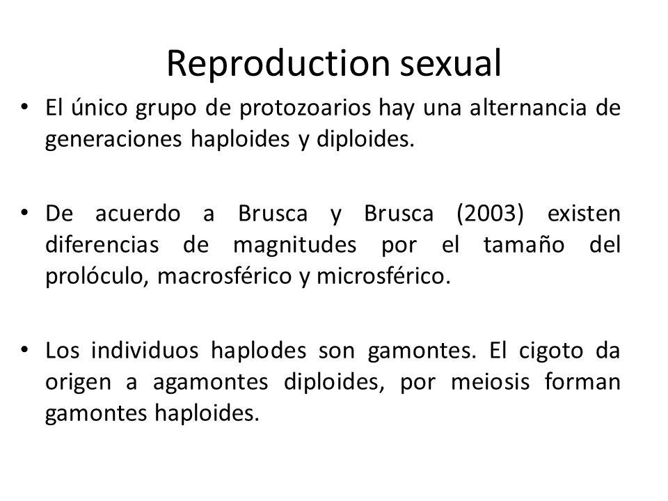 Reproduction sexual El único grupo de protozoarios hay una alternancia de generaciones haploides y diploides. De acuerdo a Brusca y Brusca (2003) exis