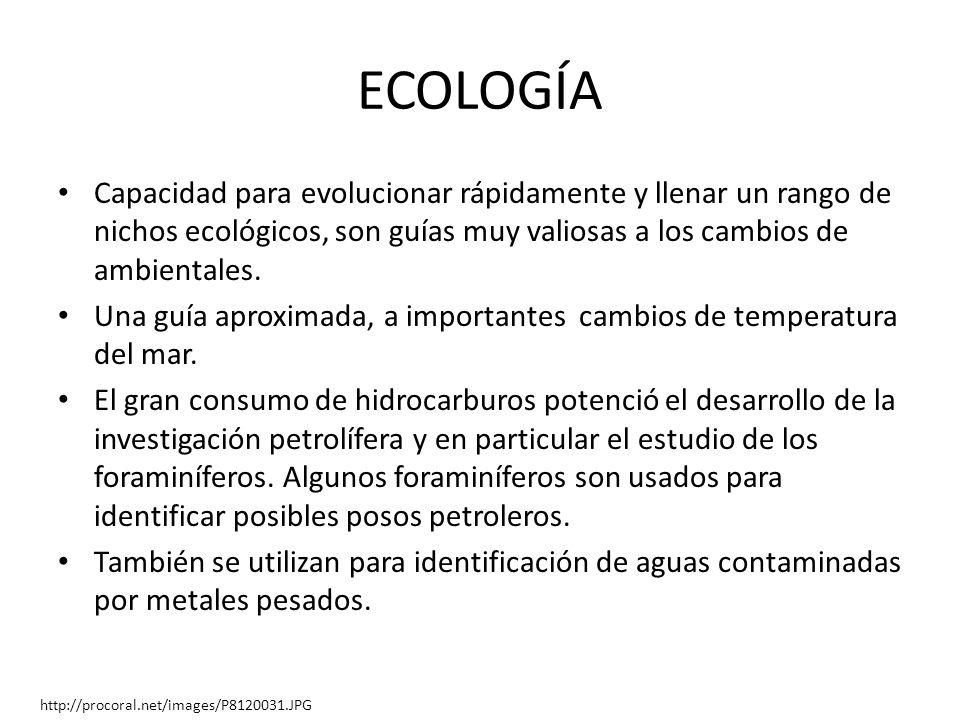ECOLOGÍA Capacidad para evolucionar rápidamente y llenar un rango de nichos ecológicos, son guías muy valiosas a los cambios de ambientales. Una guía