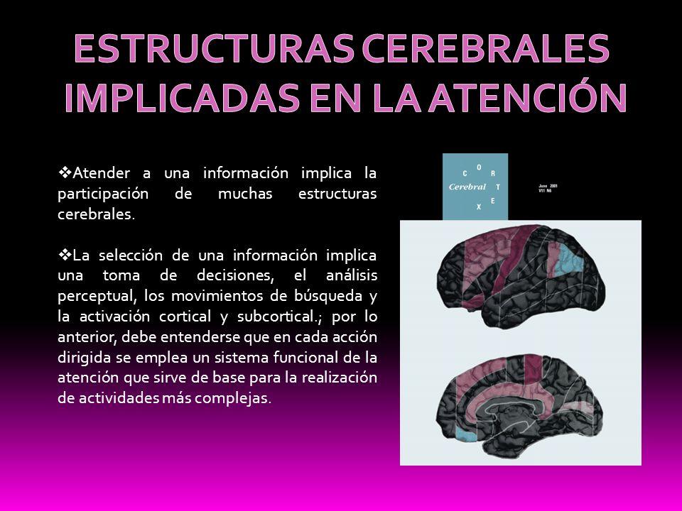 Atender a una información implica la participación de muchas estructuras cerebrales. La selección de una información implica una toma de decisiones, e