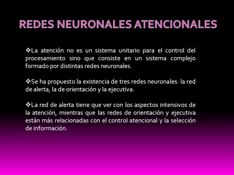 La atención no es un sistema unitario para el control del procesamiento sino que consiste en un sistema complejo formado por distintas redes neuronale