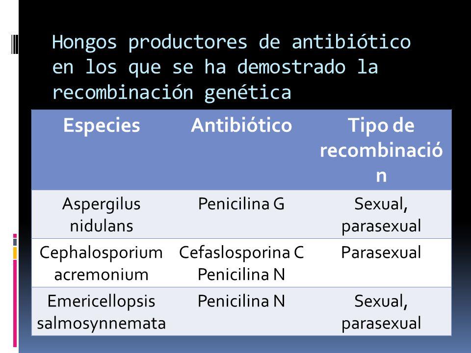 Hongos productores de antibiótico en los que se ha demostrado la recombinación genética EspeciesAntibióticoTipo de recombinació n Aspergilus nidulans