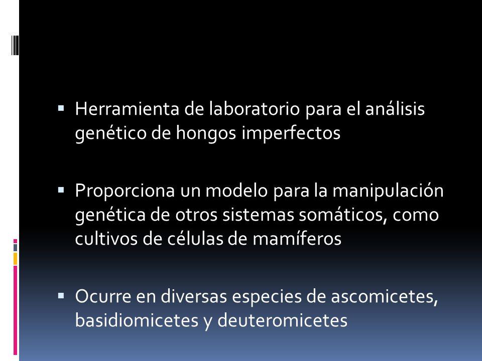 Herramienta de laboratorio para el análisis genético de hongos imperfectos Proporciona un modelo para la manipulación genética de otros sistemas somát