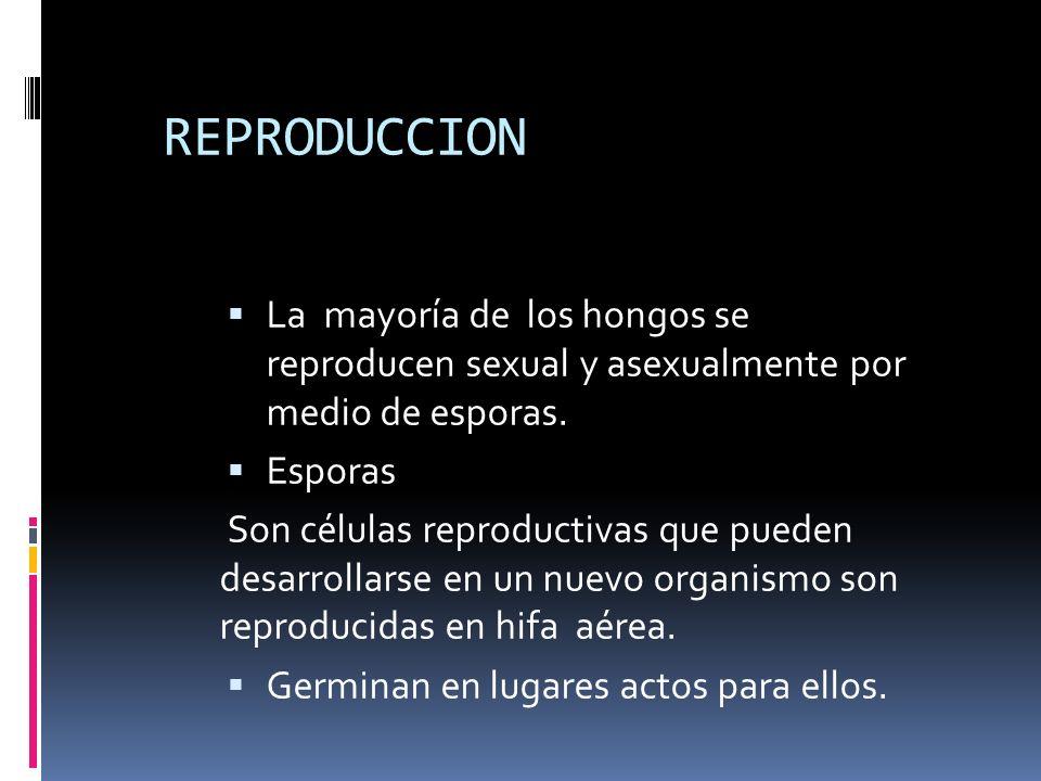 REPRODUCCION La mayoría de los hongos se reproducen sexual y asexualmente por medio de esporas. Esporas Son células reproductivas que pueden desarroll