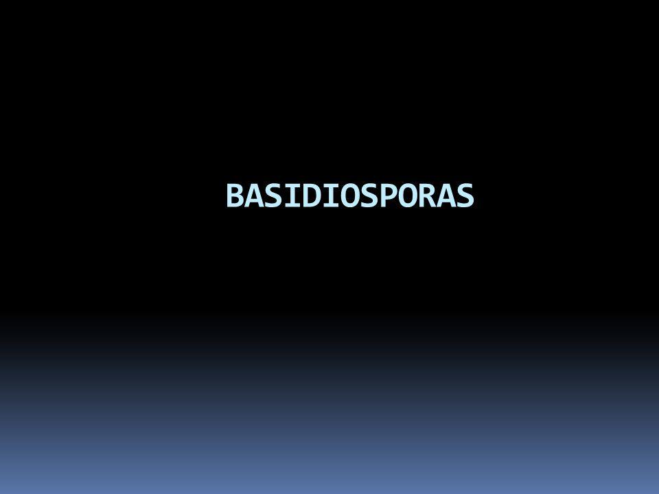 BASIDIOSPORAS