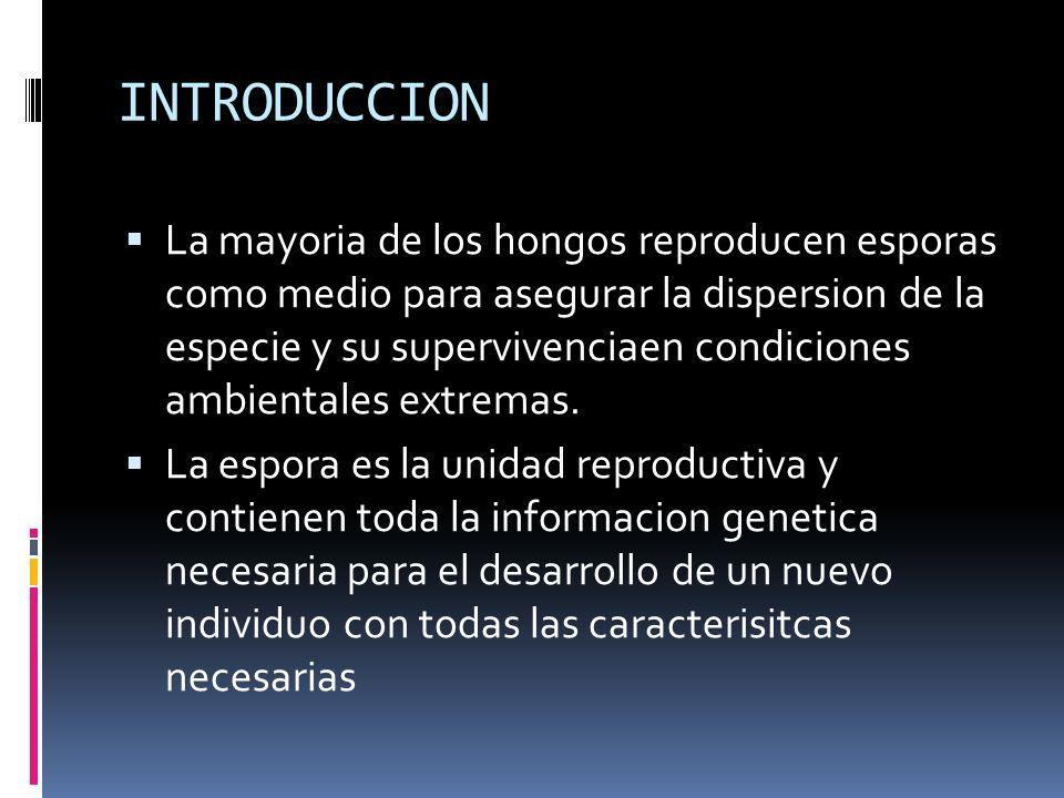 INTRODUCCION La mayoria de los hongos reproducen esporas como medio para asegurar la dispersion de la especie y su supervivenciaen condiciones ambient