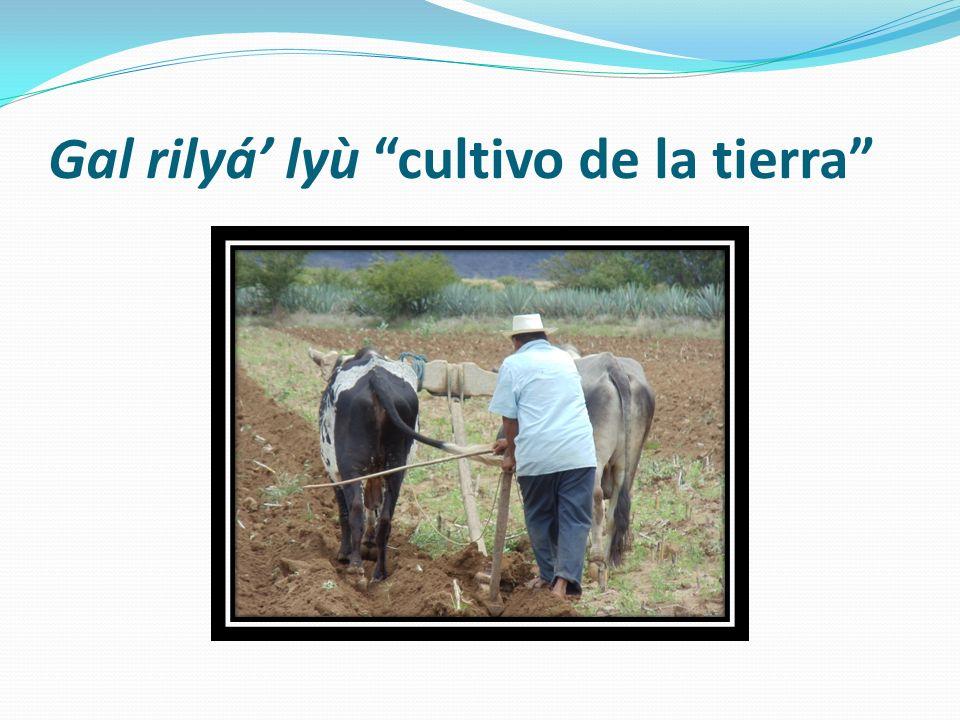 Gal rilyá lyù cultivo de la tierra