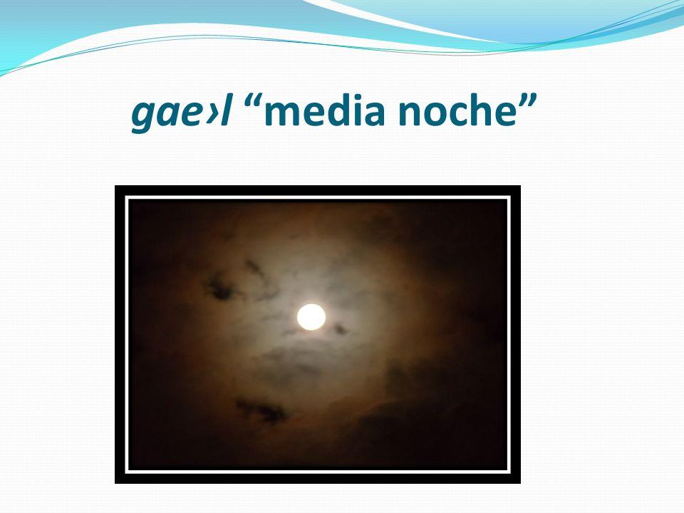 gael media noche