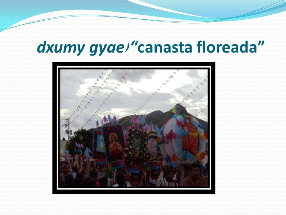 dxumy gyaecanasta floreada