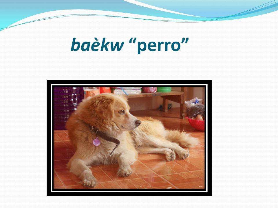 baèkw perro