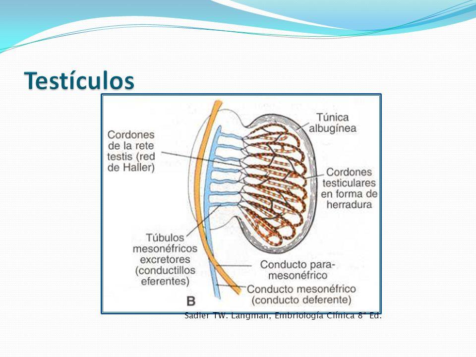 Sadler TW. Langman, Embriología Clínica 8ª Ed.
