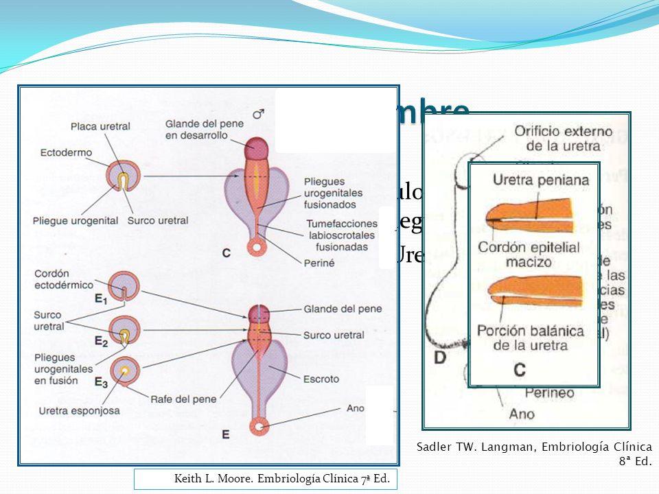Dihidrotestosterona.