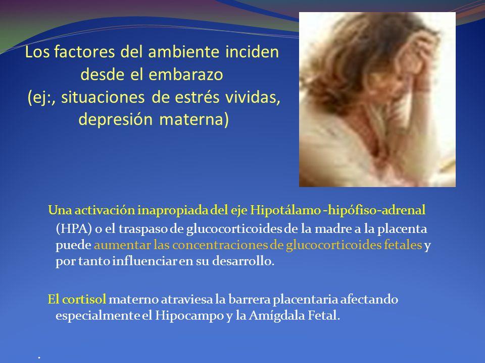 Los factores del ambiente inciden desde el embarazo (ej:, situaciones de estrés vividas, depresión materna) Una activación inapropiada del eje Hipotál