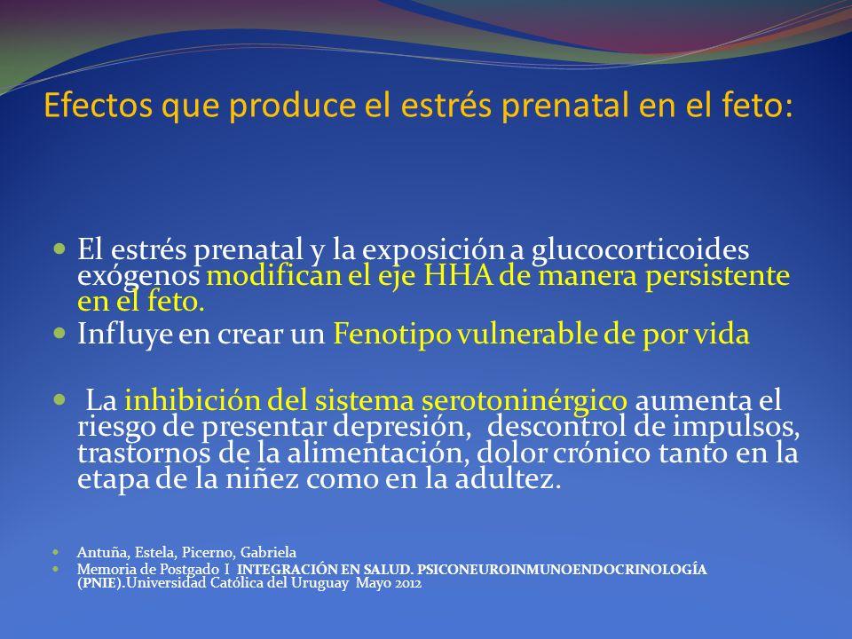 Efectos que produce el estrés prenatal en el feto: El estrés prenatal y la exposición a glucocorticoides exógenos modifican el eje HHA de manera persi
