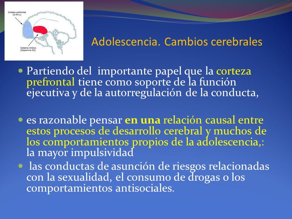 Adolescencia. Cambios cerebrales Partiendo del importante papel que la corteza prefrontal tiene como soporte de la función ejecutiva y de la autorregu