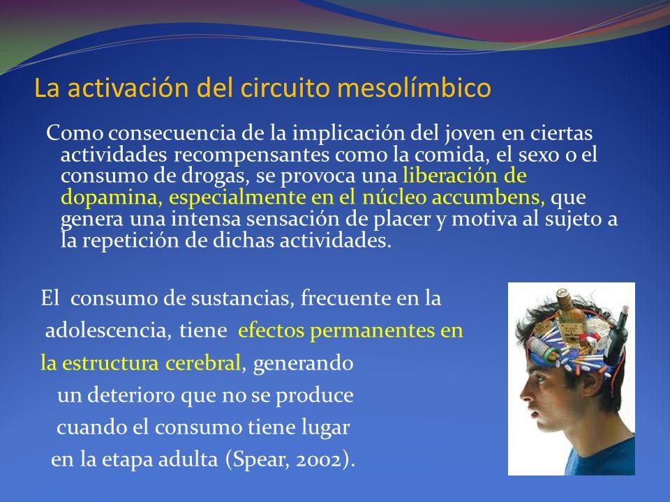 La activación del circuito mesolímbico Como consecuencia de la implicación del joven en ciertas actividades recompensantes como la comida, el sexo o e