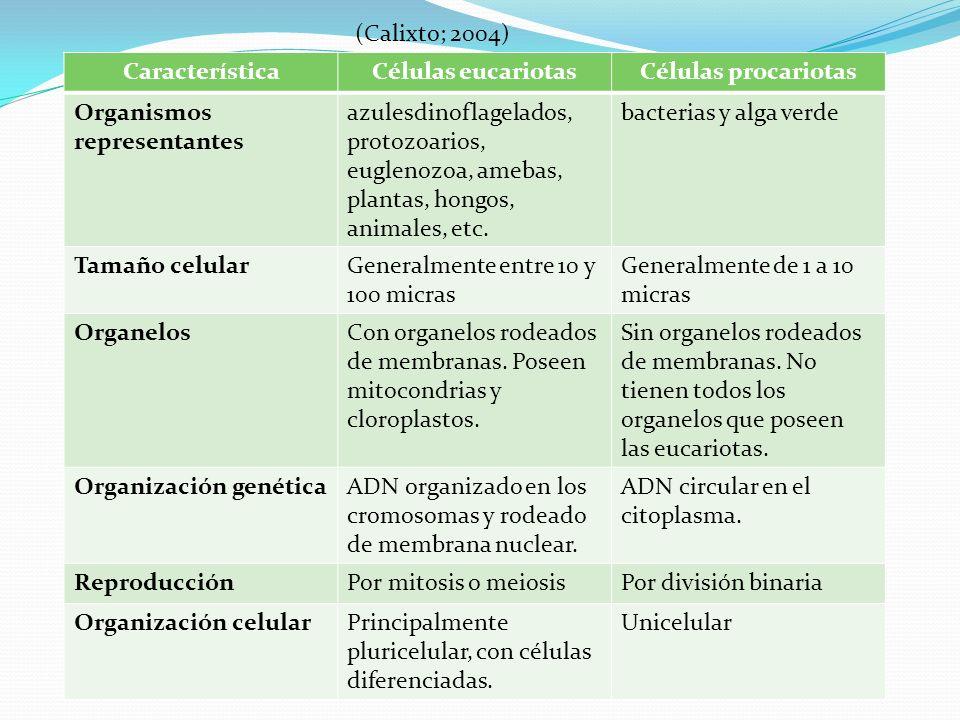 CaracterísticaCélulas eucariotasCélulas procariotas Organismos representantes azulesdinoflagelados, protozoarios, euglenozoa, amebas, plantas, hongos, animales, etc.