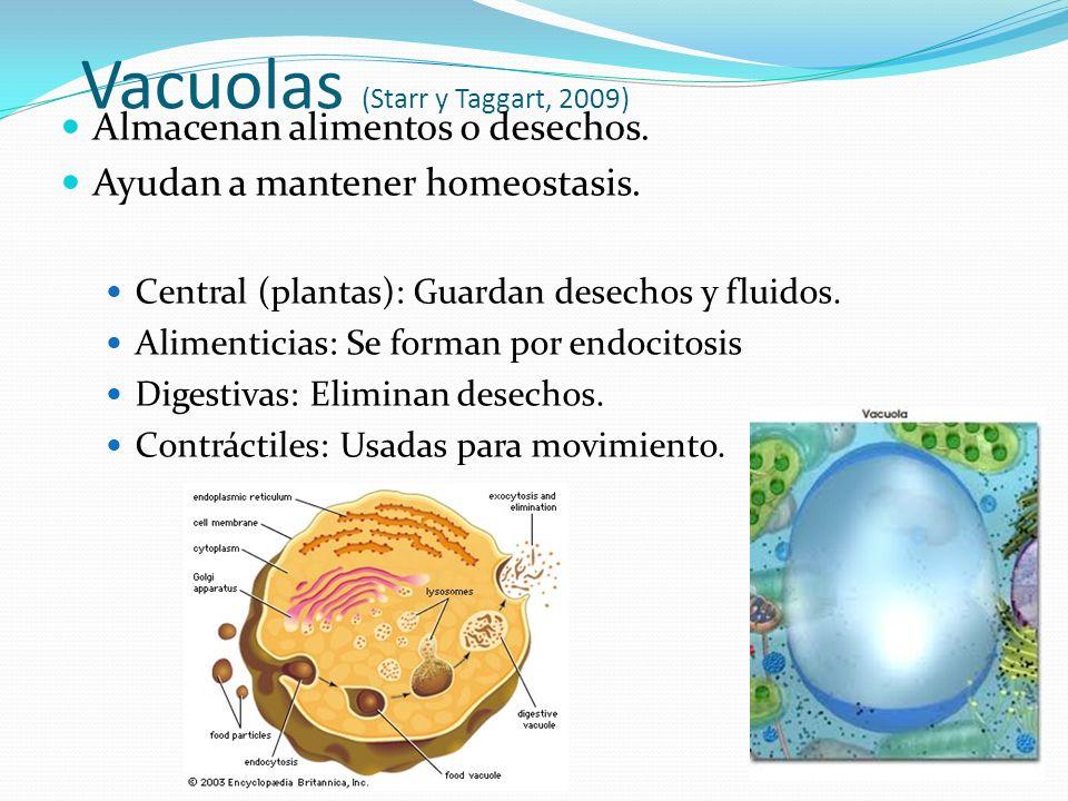 Vacuolas (Starr y Taggart, 2009) Almacenan alimentos o desechos.
