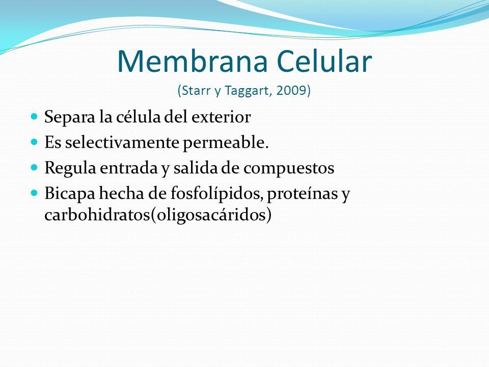 Membrana Celular (Starr y Taggart, 2009) Separa la célula del exterior Es selectivamente permeable.