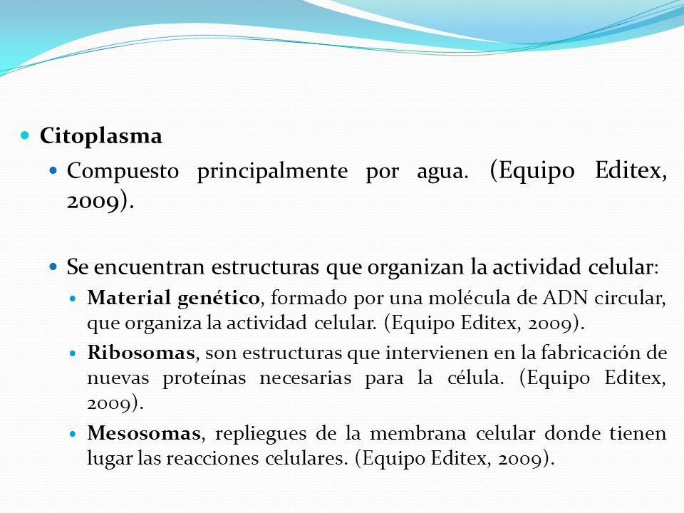 Citoplasma Compuesto principalmente por agua.(Equipo Editex, 2009).