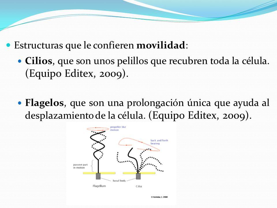 Estructuras que le confieren movilidad: Cilios, que son unos pelillos que recubren toda la célula.