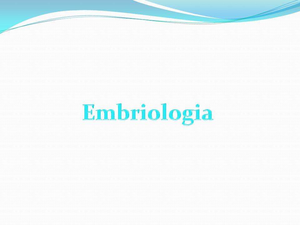 SISTEMA RENAL PronefrosMesonefros Metanefros Urología General de Smith, 13a Edición (de la 16a en Ingles), E.A.