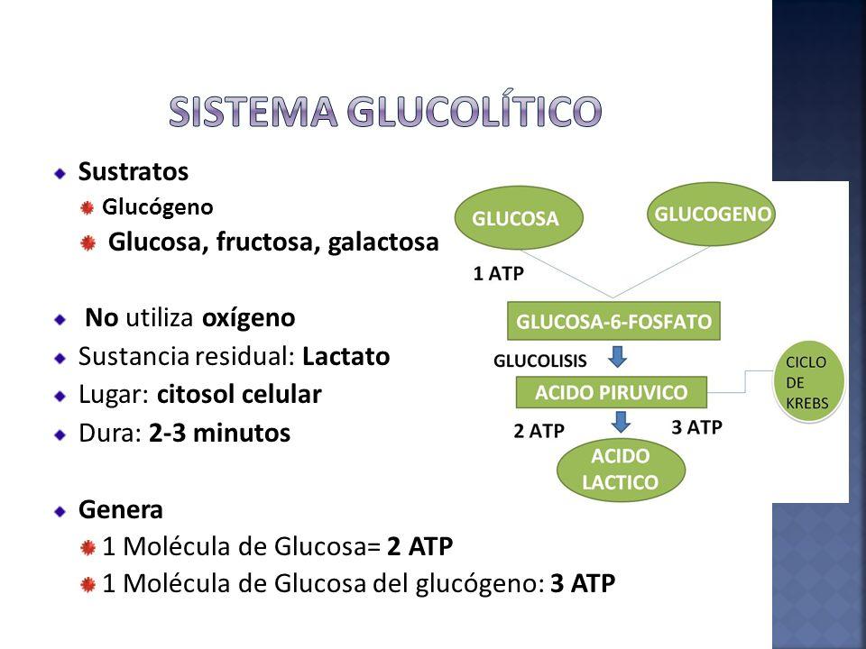 Sustratos Glucógeno Glucosa, fructosa, galactosa No utiliza oxígeno Sustancia residual: Lactato Lugar: citosol celular Dura: 2-3 minutos Genera 1 Molé