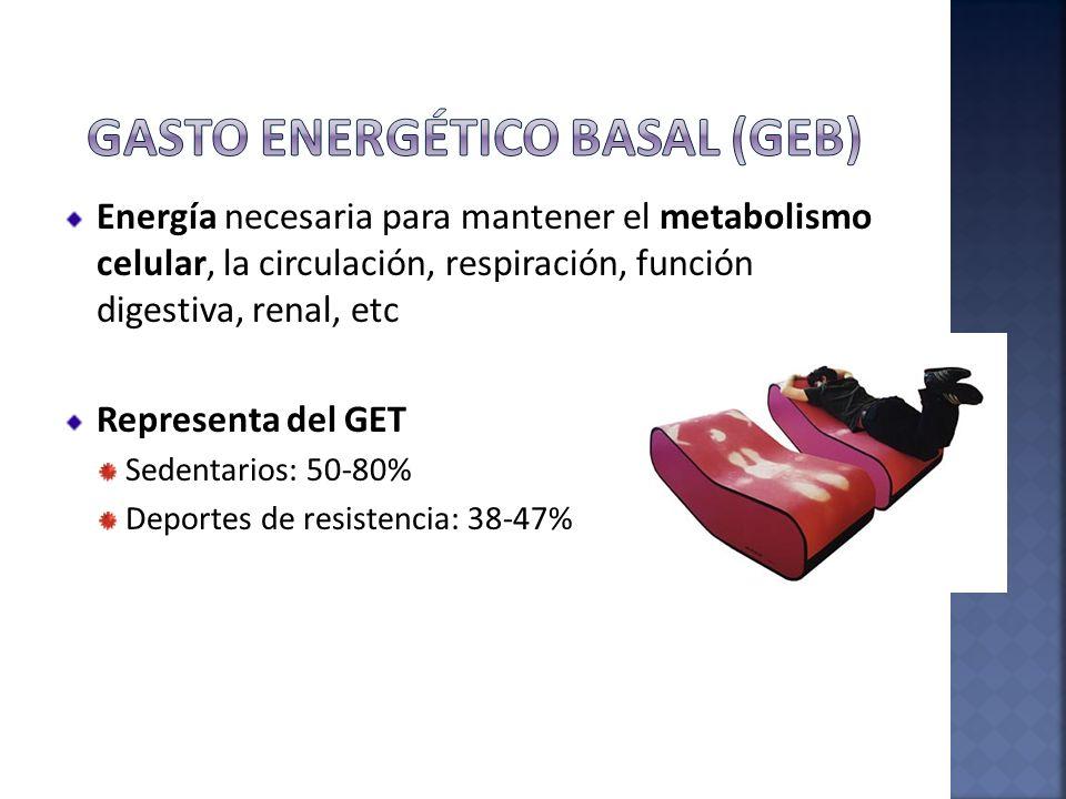 Energía necesaria para mantener el metabolismo celular, la circulación, respiración, función digestiva, renal, etc Representa del GET Sedentarios: 50-